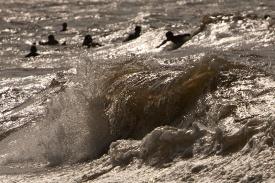 Banhado pela baia do Marajó praias com fortes ondas são usadas por surfistas. Mosqueiro, Belém, Pará, Brasil. Foto Paulo Santos 06/10/2011