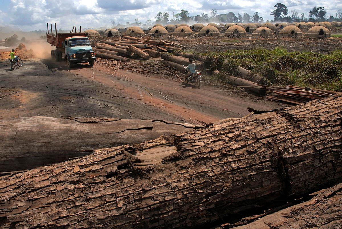 Desmatamento na Amazônia volta a crescer emjaneiro