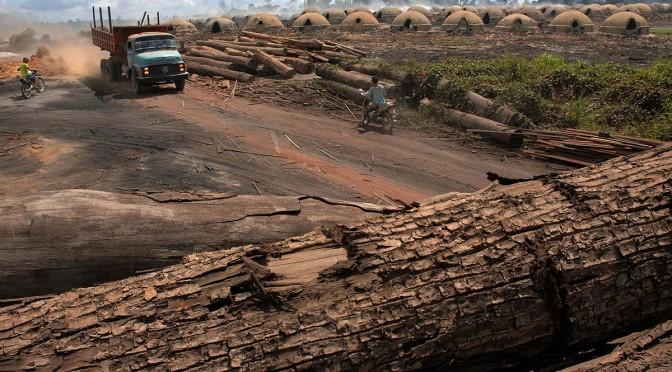 Desmatamento na Amazônia volta a crescer em janeiro