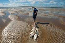 Pescadores retiram peixes da rede montada em um banco de areia a cerca de 3 km no litoral do Pará, na foz do rio Amazonas. Os pescadores chegam a capturar cerca de 200 quilos de pescado por dia entre: piramutabas, sardinhas, filhotes, pescada amarela, robalo e tainhas. Curuçá·, Pará, Brasil. Foto: Paulo Santos