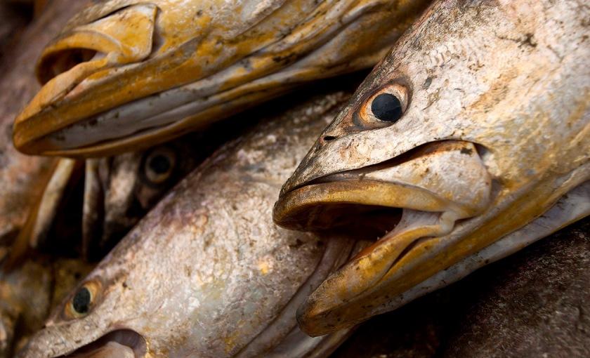 Pesca em Romana  /  Foto Paulo Santos