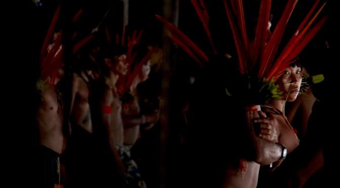 Sangue dos Yanomami volta ao Brasil