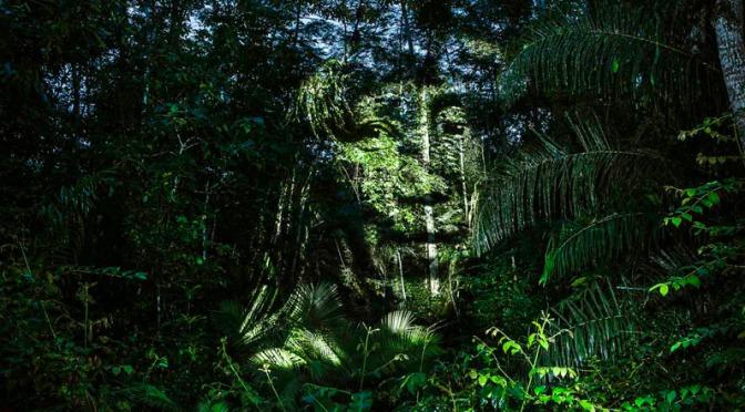 Fazendo Arte com os Suruí
